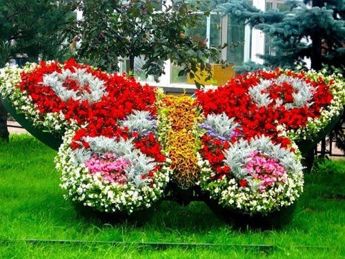 Цветы для улицы фото названия и уход
